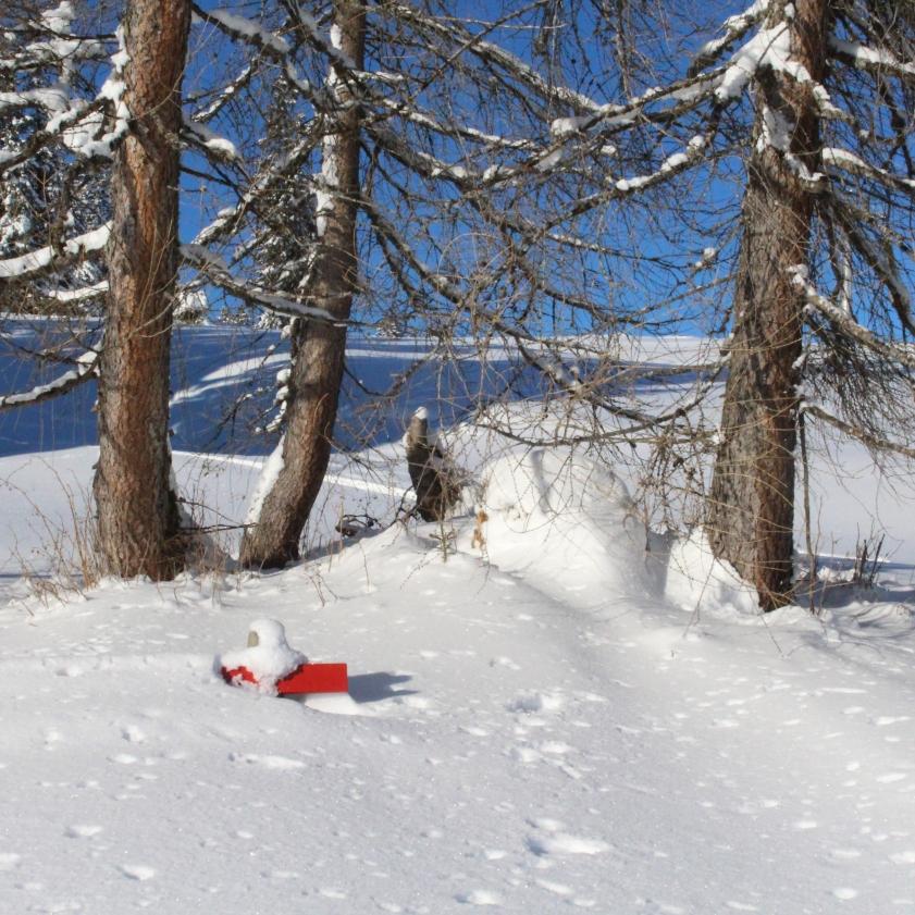 lucie-anderruti-skitag-2016-013
