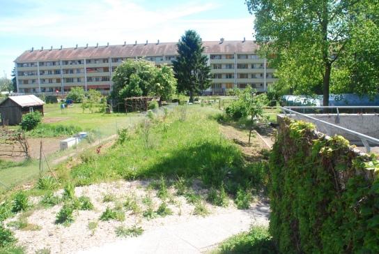 Bepflanzug im Sommer 2016, Blick vom Eingangsbereich in Richtung Familiengärten