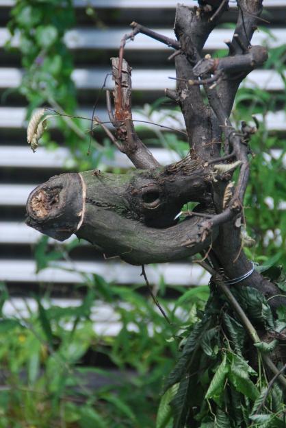 17-12-10-stefan haltinner - DSC_0085