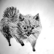 Hund, von Sophie Ruf